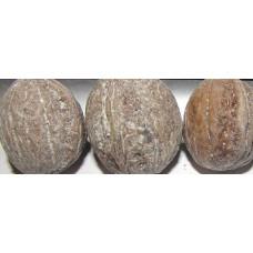 Орех грецкий, сеянцы сорта Идеал среднего срока созревания.  Из семян с Ленобласти